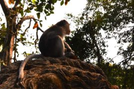 Monkey in the Monkeyforest Ubud, Bali