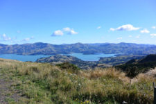 Akaroa, New Zealand - Layback Travel