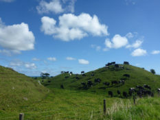 Ben & Jerry Ice Cream Cows, New Zealand - Layback Travel
