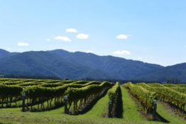 Marlborough Wine Country Mountains, New Zealand - Layback Travel
