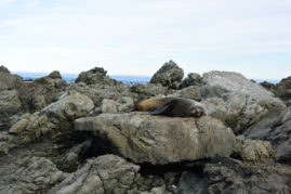 Lazy seals, New Zealand - Layback Travel