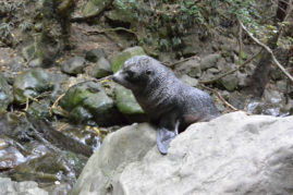 Seal Puppy, New Zealand - Layback Travel