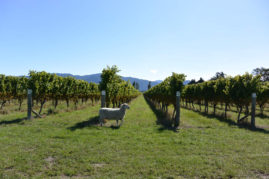 Marlborough Wine Country, New Zealand - Layback Travel