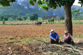 Tobacco Farmers near Viñales, Cuba - Layback Travel