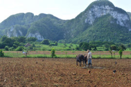 Farmer near Viñales, Cuba - Layback Travel
