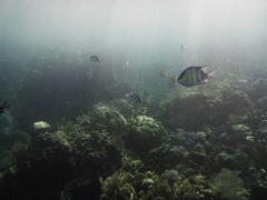 Underwater Fish in Amed while Freediving - Layback Travel